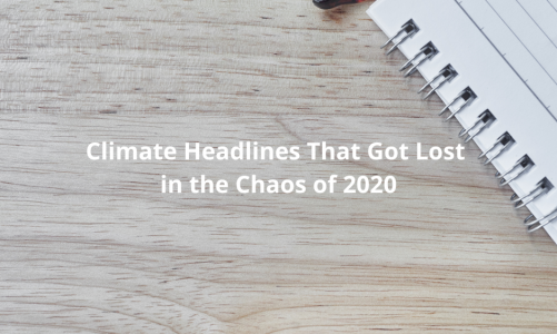 Climate Headlines That Got Lost in the Chaos of 2020