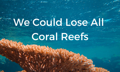 We Could Lose All Coral Reefs